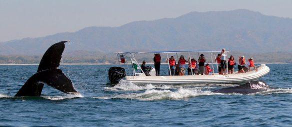 Four Season Punta Mita observação de baleias