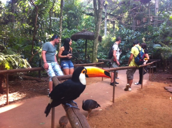 Foz do Iguacu Parque das Aves