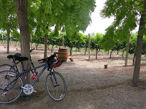 Bike vinhedos de Mendoza