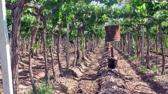 15 - Vinicolas - Familia Zuccardi (2)