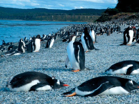 Low_54372135_USHUAIA_pinguinera